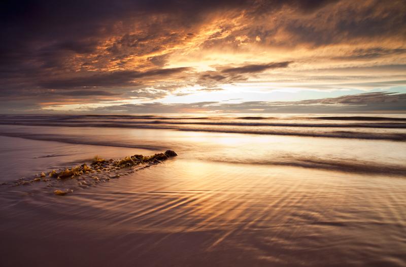 Kelp - Isle of Man Seascapes/Coastal
