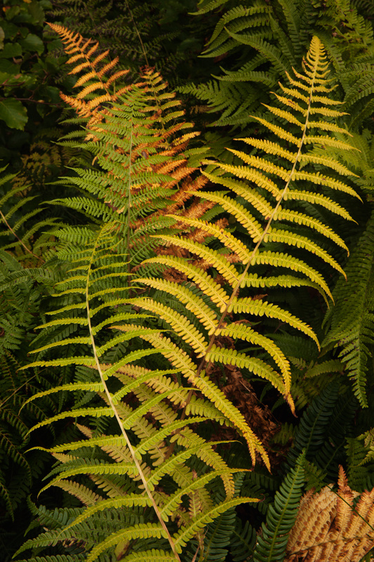 The Fern Dance - The Isle of Man Close Up