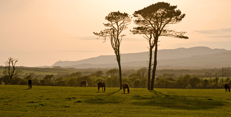 Thoroughbreds - Isle of Man Landscapes