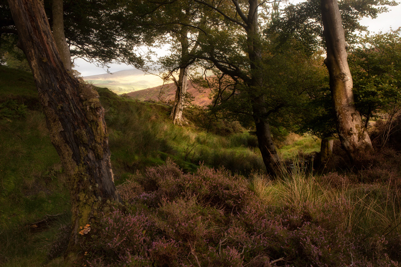 Beyond The Dale - Isle of Man Landscapes