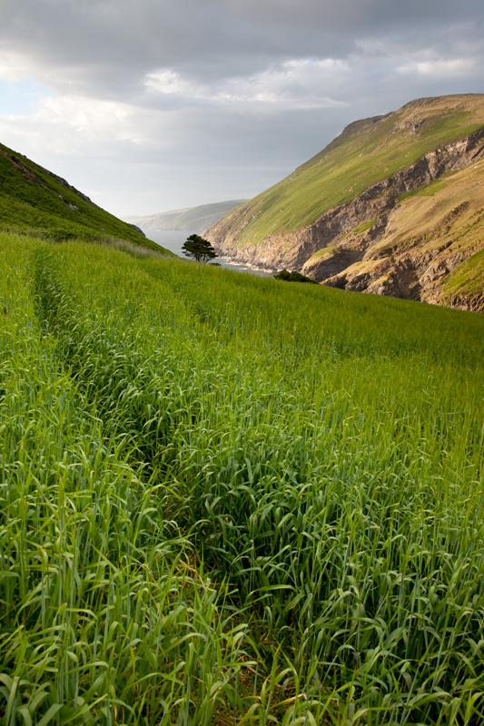 Fleshwick - Isle of Man Landscapes