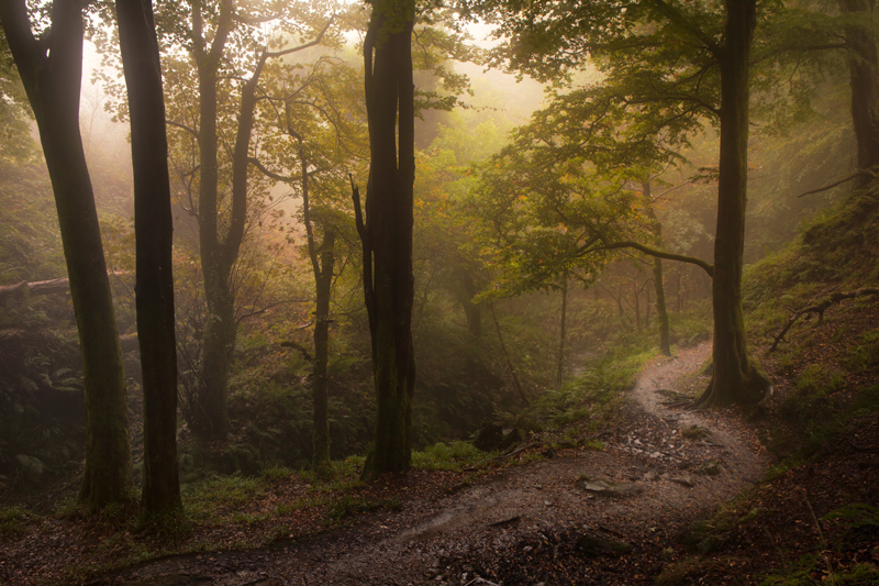 Dhoon Glen Mist - Manx National Glens