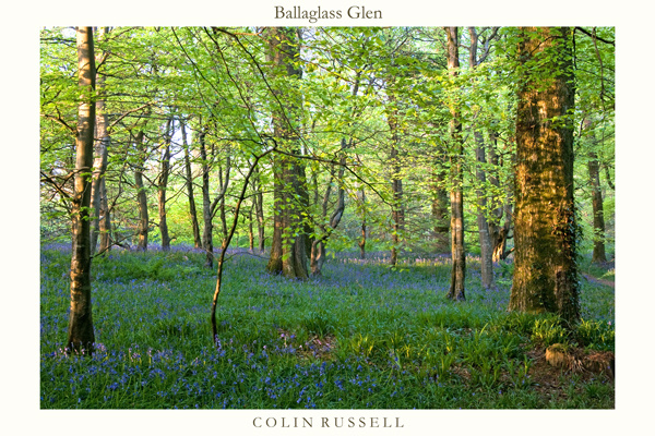 Ballaglass Bluebells - Manx National Glens