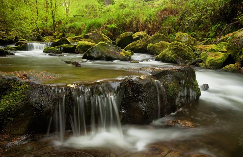 May in the Glen - Manx National Glens