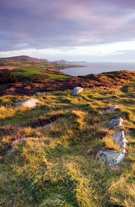 September Heather - Isle of Man Landscapes