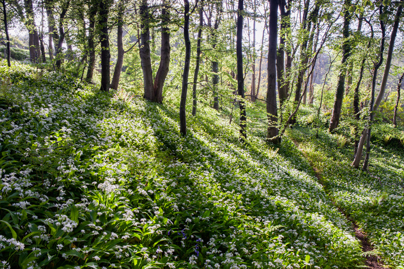 Woodland Wonderland - Isle of Man Landscapes