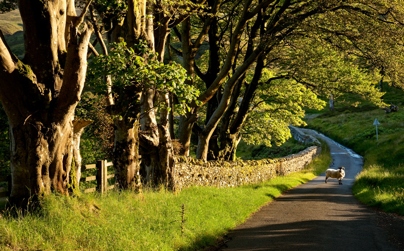 The Druidale Road - Isle of Man Landscapes