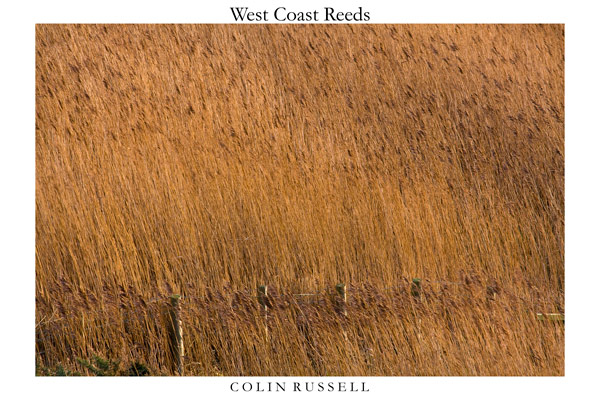 West Coast Reeds 2 - Isle of Man Landscapes