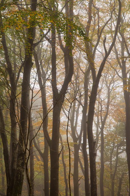 Autumn Mist - Manx National Glens