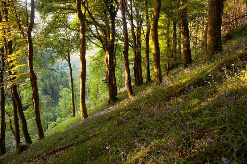 Summer Bells - Isle of Man Landscapes