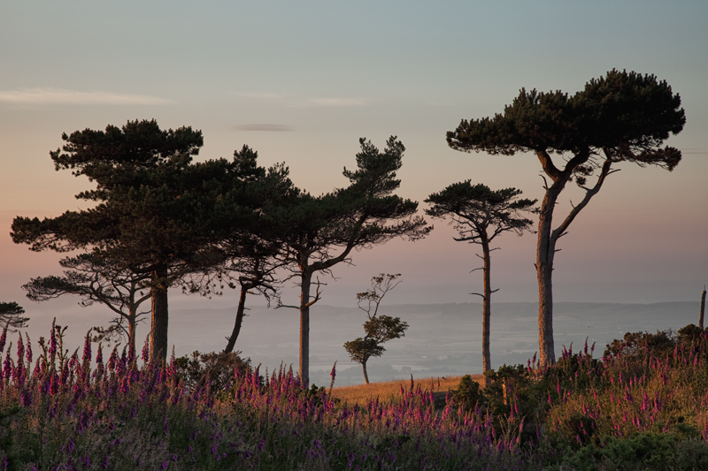 Naturally Framed - Isle of Man Landscapes
