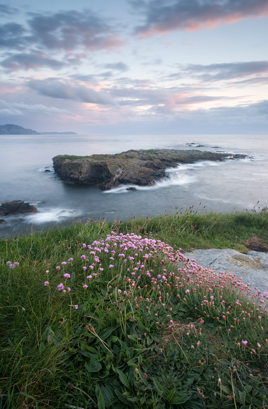 Niarbyl Thrift - Isle of Man Seascapes/Coastal
