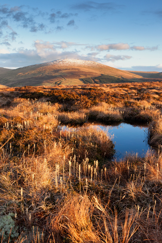 Upland Grasses - Isle of Man Landscapes