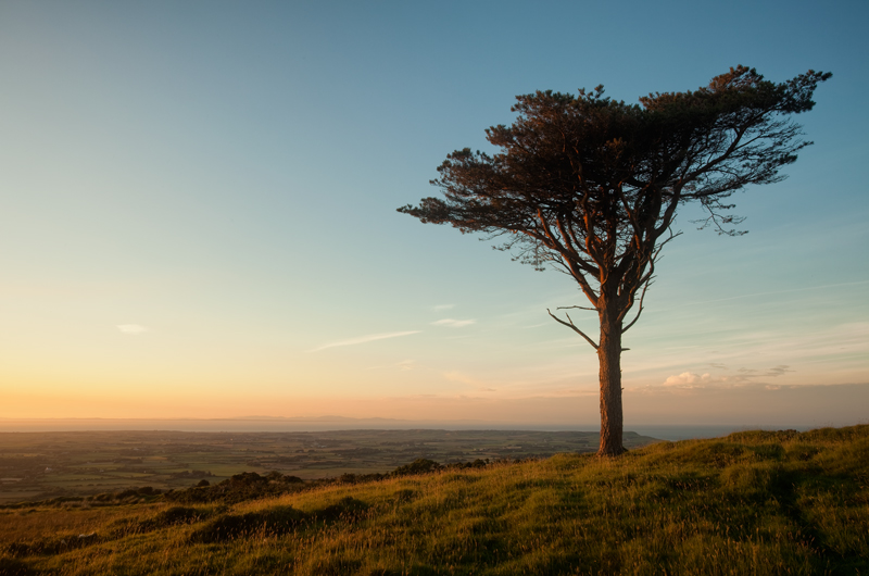 The Lonesome Pine - Isle of Man Landscapes