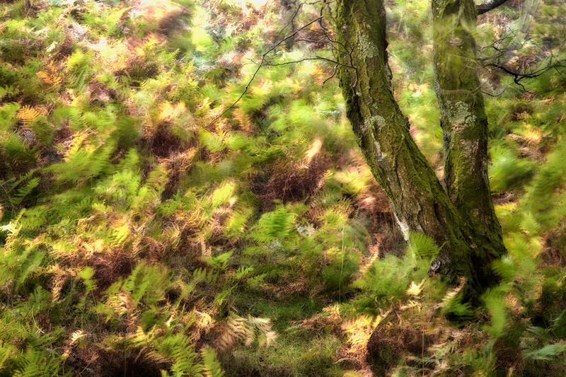 Autumn Blur - Other Work