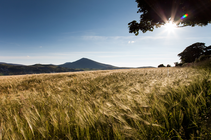 Barrule and Barley - Isle of Man Landscapes