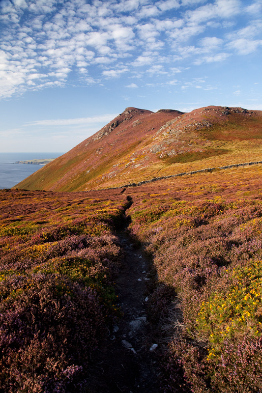 Burroo Meanagh Heather - Isle of Man Landscapes