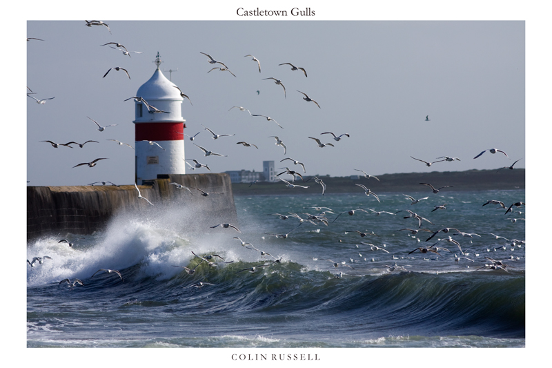 Castletown Gulls - Isle of Man Seascapes/Coastal