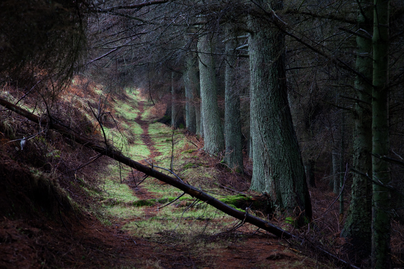 If you go down to the woods today... - Manx National Glens