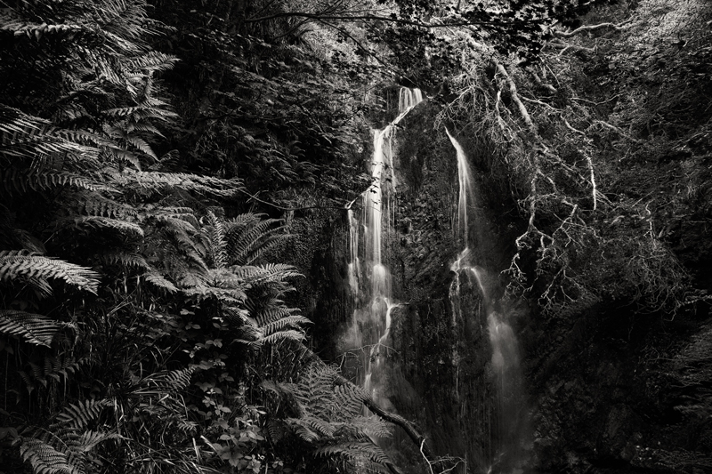 Welcome to the Jungle - Mann in Mono