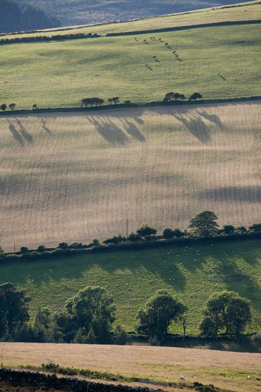 Crop Rotation - Isle of Man Landscapes