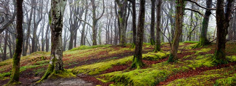 Dhoon Mist - Manx National Glens