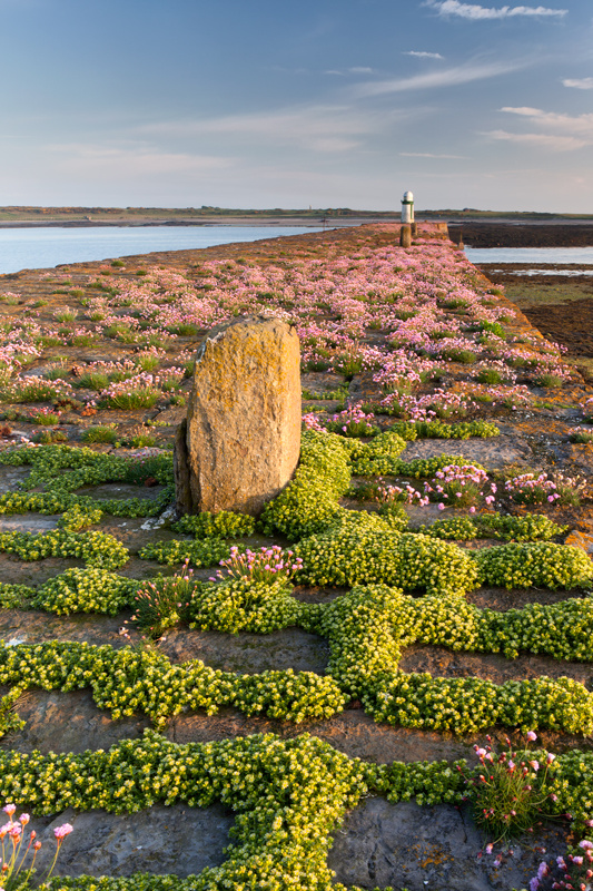 Breakwater Bloom - National Landmarks