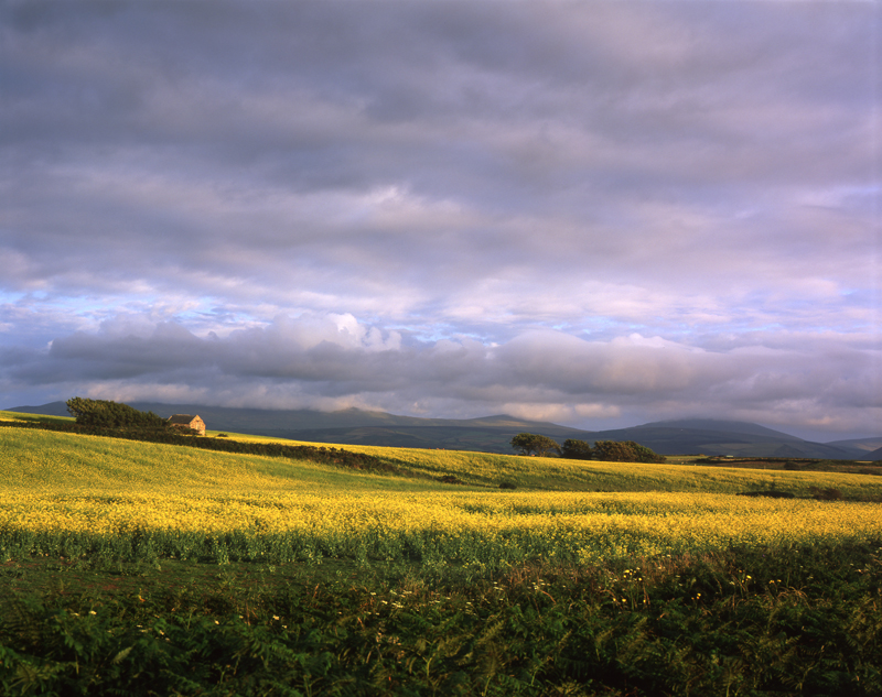 Field of Dreams - Isle of Man Landscapes