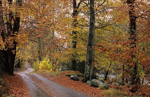 Brathay - Lake District