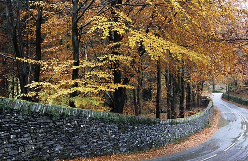 Beeches - Lake District