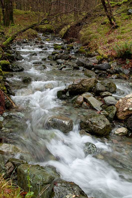 Beck in Dalt Wood - Lake District