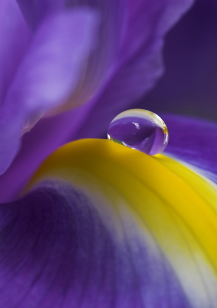 Purple rain - Flora