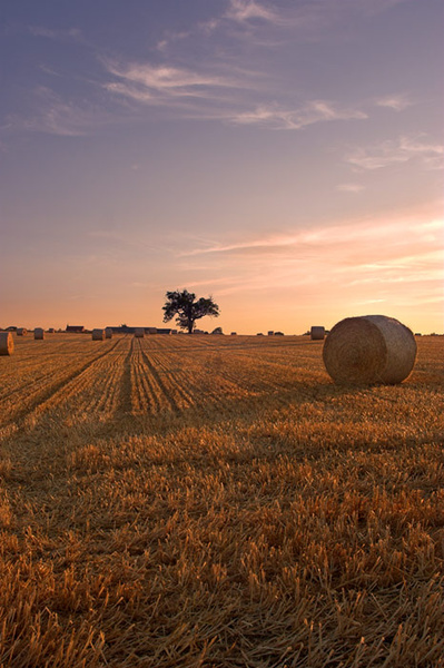 Make Hay While the Sun Shines - Landscapes