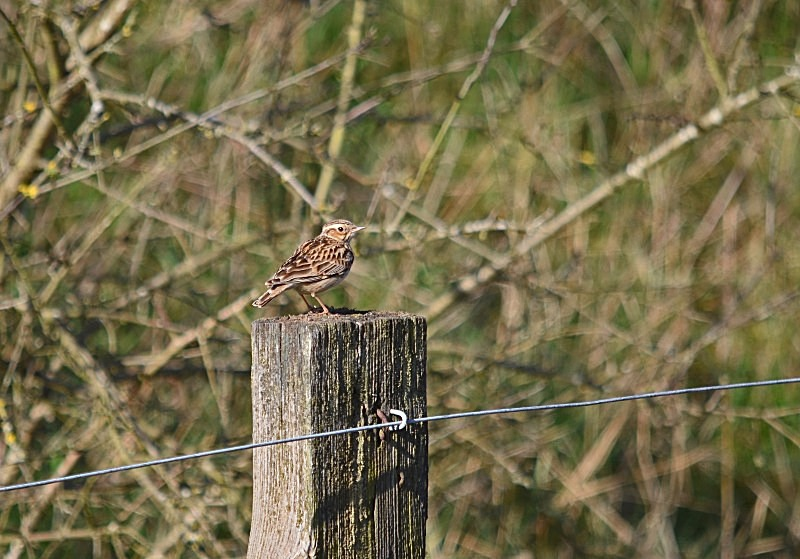 March to April 2014 - Woodlark - Photos of the month