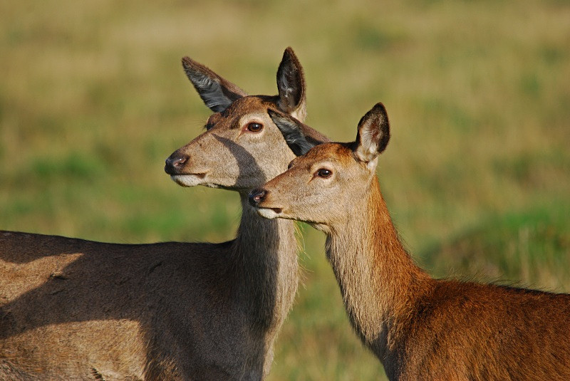 October 2010 - Red Deer - Photos of the month
