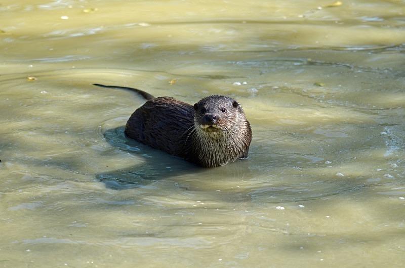 Otter - Otter