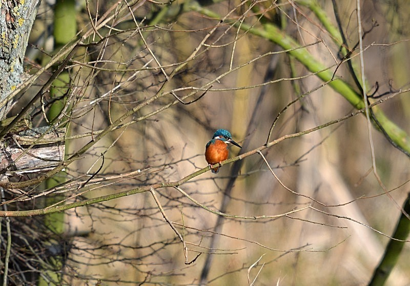 February 2012 - Kingfisher - Photos of the month