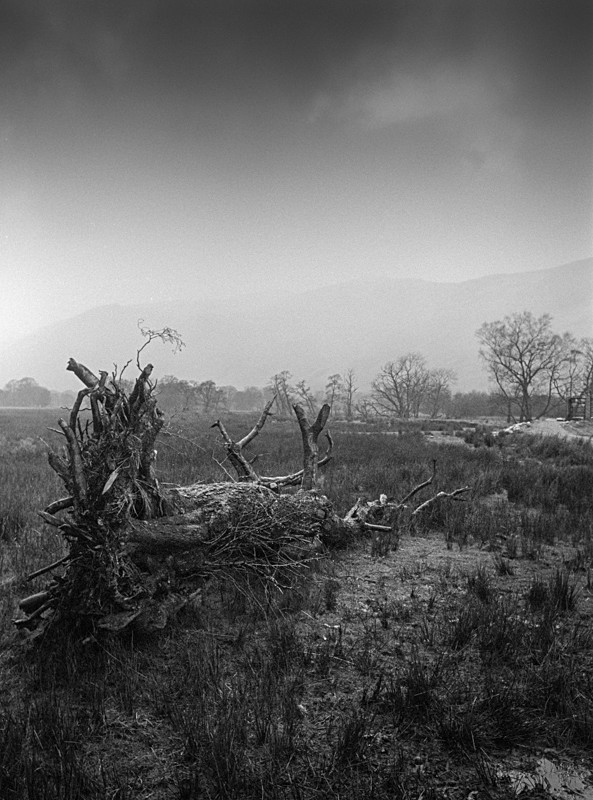 Fallen #1, Lake District - Landscapes