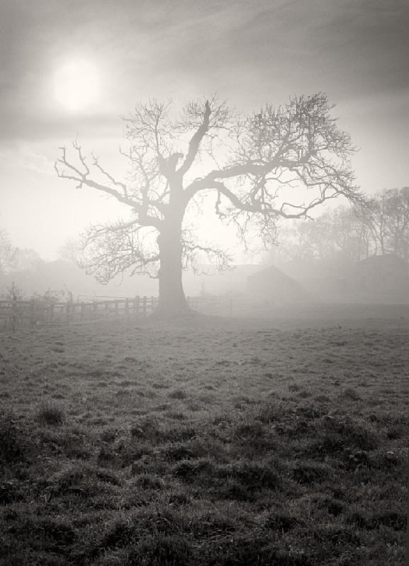 Foggy Dream