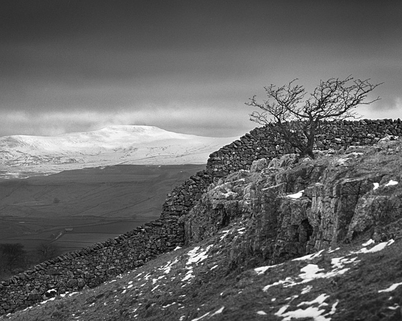 Ingleborough in Winter - Landscapes