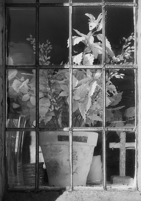 Window Flowers Farnley Church in Black and White - Abstract & Still Life