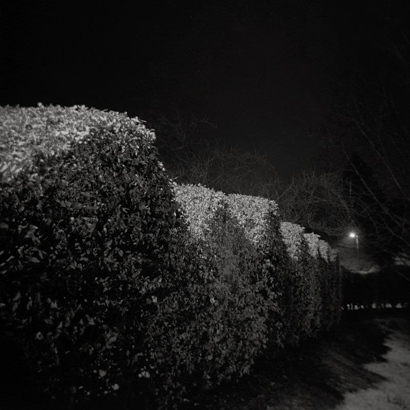 Hedge at night Ilkley, Holga 120N - Holga 120N