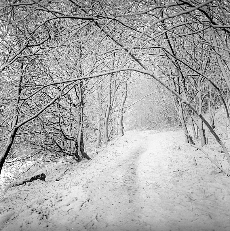Winter Path (square format) - Landscapes
