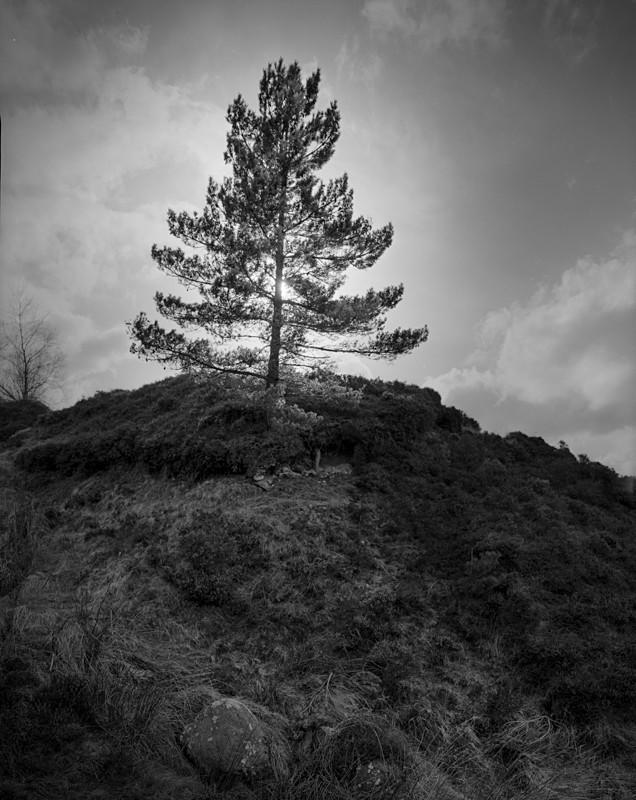Lone Pine, Ilkley Moor - Landscapes