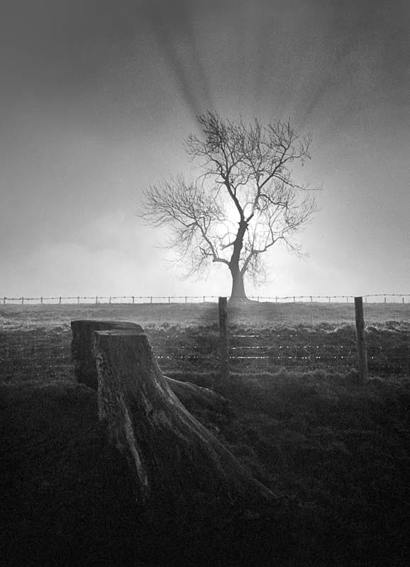 Dead or Alive - Landscapes