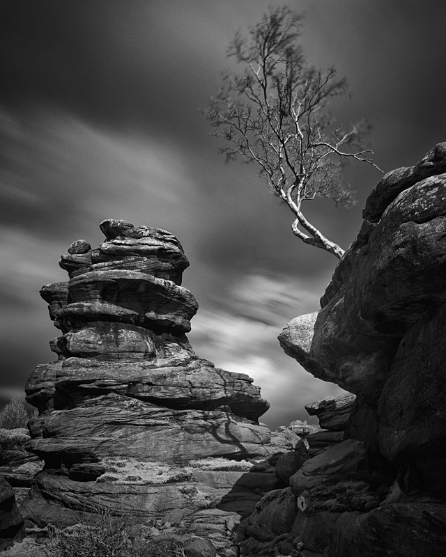 Running Tree, Brimham Rocks - Infrared