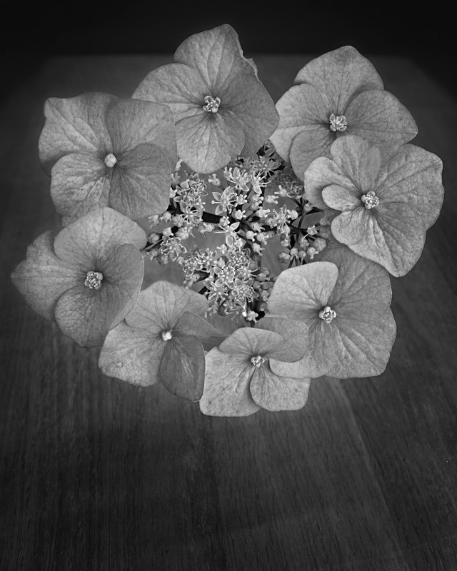 Ring of Flowers Black and White Still Life - Abstract & Still Life