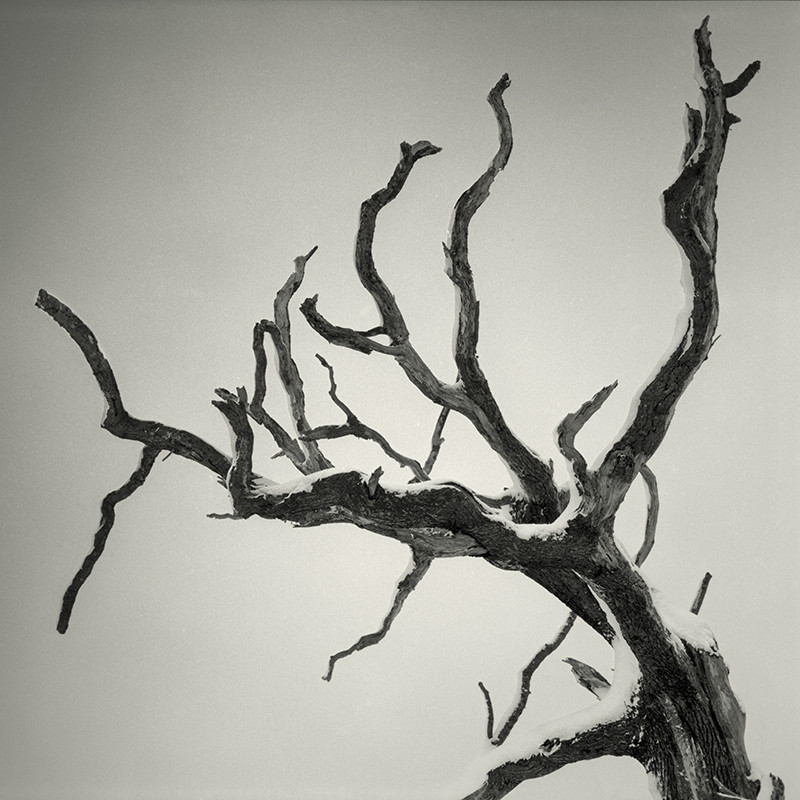 Dead Tree Horsforth in BLack & White - Abstract & Still Life