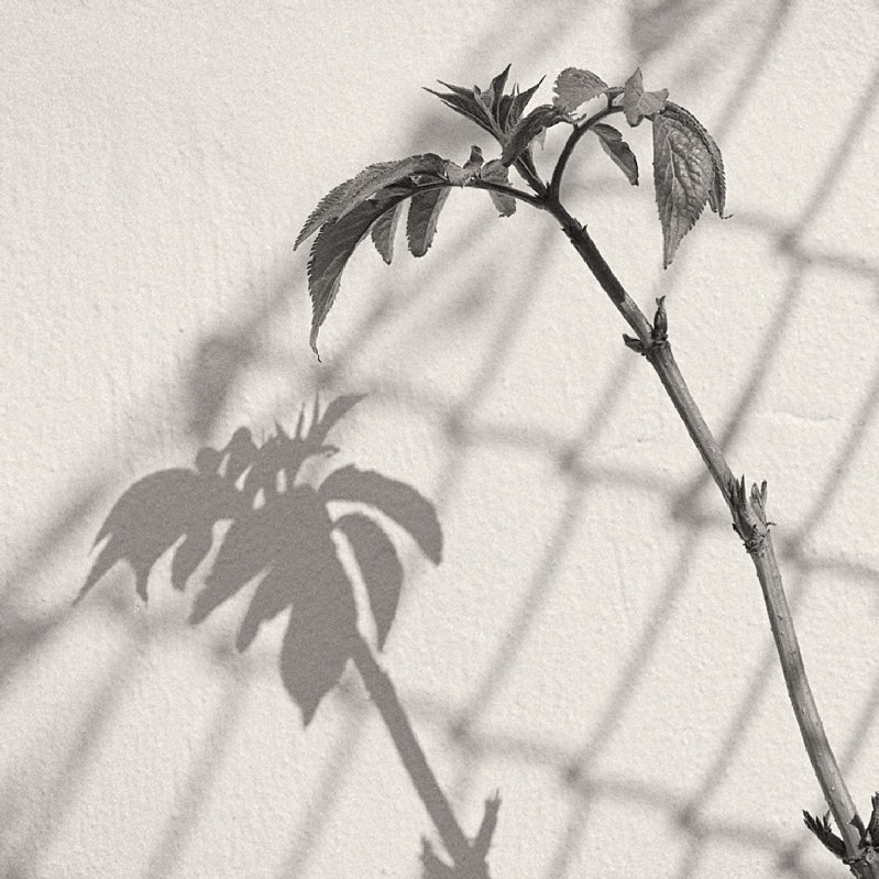 Leaf Shadow Leeds City Centre in Black & White - Abstract & Still Life
