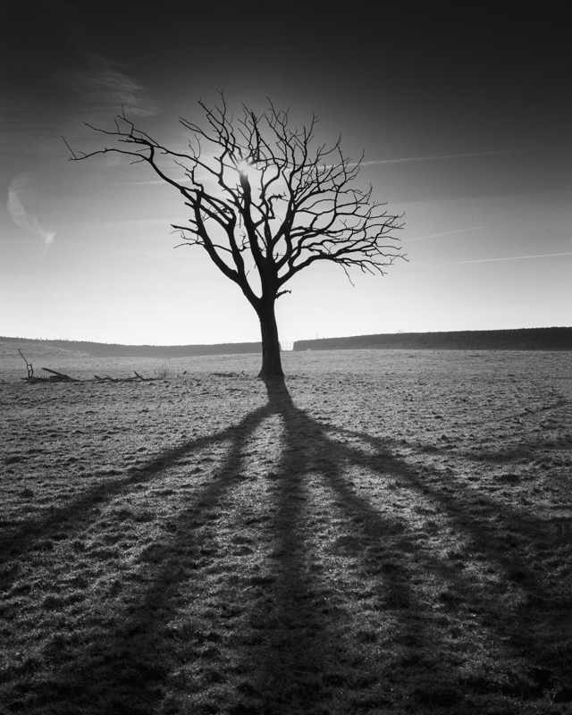 Shadow of the Tree
